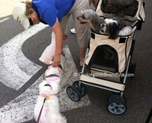 Dogs Welcome - CBM
